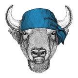 Buffalo, bisonte, bue, bandana dell'animale selvatico del toro o bandana o immagine d'uso del bandanna per il pirata Seaman Sailo Immagine Stock