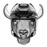 Buffalo, bisonte, bue, sport animale d'uso dell'hockey degli sport invernali di sport del casco dell'hockey dell'animale selvatic Fotografie Stock
