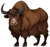 Buffalo with brown fur. Illustration royalty free illustration
