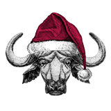 Buffalo, bull, ox Christmas illustration Wild animal wearing christmas santa claus hat Red winter hat Holiday picture. Christmas illustration Wild animal wearing royalty free illustration