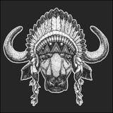 Buffalo, bull, ox Cool animal wearing native american indian headdress with feathers Boho chic style Hand drawn image. Buffalo, bull, ox Hand drawn illustration Stock Photos