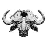 Buffalo, bull, ox wearing pirate hat Cocked hat, tricorn Sailor, seaman, mariner, or seafarer. Wild animal wearing pirate cocket hat Stock Photos
