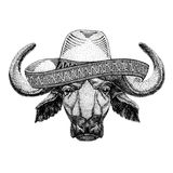 Buffalo, bull, ox Wild animal wearing sombrero Mexico Fiesta Mexican party illustration Wild west. Wild animal wearing sombrero Mexico Fiesta Mexican party royalty free illustration