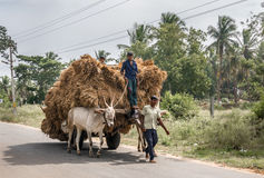 Buffalo cart transport is full Royalty Free Stock Photo