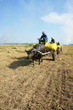 Buffalo cart transport paddy in rice sack Royalty Free Stock Photo