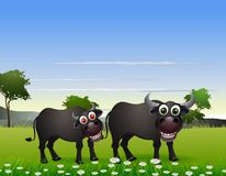 Buffalo cartoon with nature background Stock Photos