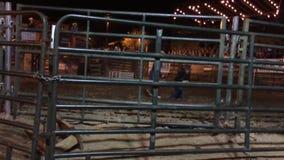 Buffalo Chip 3779 stock footage