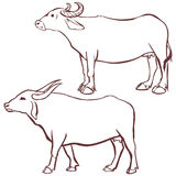 Buffalo cow outline. Vector illustration on white background Stock Photos