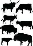 Buffalo and cow silhouettes Royalty Free Stock Image