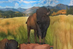 Buffalo display at the Garden of the Gods visitor center Stock Photo