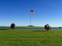 Buffalo e bandiera americana Fotografia Stock