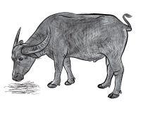 Buffalo eating hay-vector Stock Photos