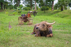 Buffalo farm tractor Royalty Free Stock Image