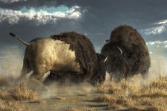 Buffalo Fight royalty free illustration
