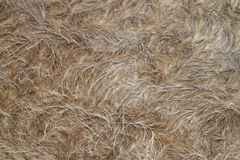 Buffalo fur Stock Image