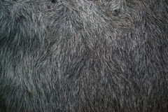 Buffalo fur texture Stock Photo