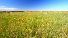 Buffalo Gap National Grassland stock footage