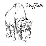 Buffalo in graphic style Stock Images