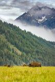 Buffalo Grazing in the Tetons Stock Photos