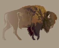Buffalo. Hand-drawn illustration Stock Photos