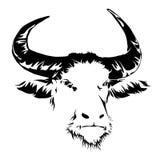 Buffalo head black and white. Royalty Free Stock Photography