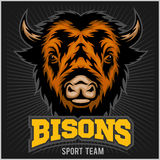 Buffalo head with horns. Logo for any sport team bison Royalty Free Stock Photos