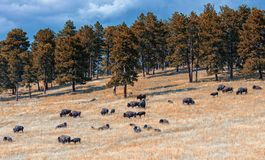 Buffalo Herd Overlook; I-70, CO royalty free stock images