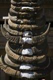 Buffalo horns Stock Image