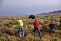 Buffalo hunters Stock Images
