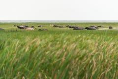 Buffalo in lago immagini stock libere da diritti