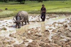 buffalo lemiesza wody zdjęcia royalty free