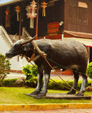 Buffalo male statue. Royalty Free Stock Photography