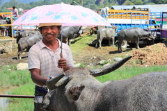 Buffalo Market Trader. A man smiles whilst trying to sell his prized Buffalo at a market in Sulawesi Indonesia Royalty Free Stock Photography