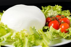 Buffalo mozzarella Royalty Free Stock Image