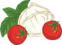White Buffalo Mozzarella, Tomatoes and Green Basil. Buffalo Mozzarella, Tomatoes and Green Basil Isolated on a White. Hand Drawn Illustration Royalty Free Stock Photos