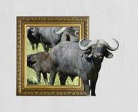 Buffalo nel telaio con effetto 3d Fotografia Stock Libera da Diritti