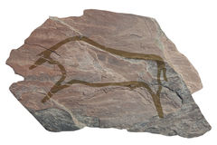 Buffalo . Old ancient petroglyph Stock Photo