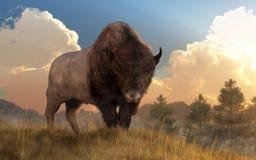 Buffalo On A Grassy Hill Royalty Free Stock Photos