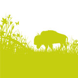 Buffalo On The Prairie Royalty Free Stock Photos