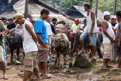 Buffalo and other animals at market. Philippines Stock Image