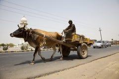 Buffalo pulling cart India Royalty Free Stock Photo