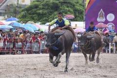 Buffalo race of Chonburi.  Royalty Free Stock Photo