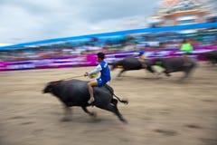 Buffalo race of Chonburi.  Royalty Free Stock Photos