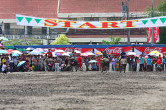 Buffalo Racing. CHONBURI - Mar 3 : Unidentified participants in 138 th Buffalo Racing Festival on Mar 3, 2009. Chonburi, Thailand. Buffalo Racing Festival is a royalty free stock photography