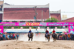 Buffalo racing in Chonburi Royalty Free Stock Image