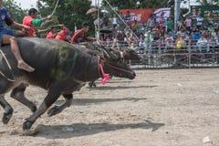 Buffalo racing festival 2015 Royalty Free Stock Photos