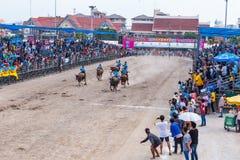 Buffalo Racing Festival in Chonburi Thailand Stock Photo