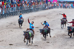 Buffalo Racing Festival in Chonburi Thailand. CHONBURI - OCTOBER 26 : Unidentified participants in 144th Buffalo Racing Festival on October 26, 2015. Chonburi Stock Photos
