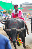 Buffalo Racing Festival, Thailand Stock Photo