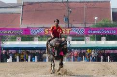 Buffalo racing , Traditional Festival. Royalty Free Stock Photo